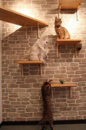 Wood Pet Steps Foter