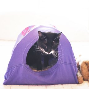Dog tent bed 15
