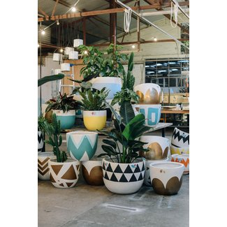 Large Indoor Plant Pots - Ideas on Foter
