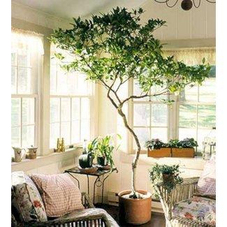 Large Indoor Plant Pots - Foter