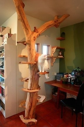 Cat Trees And Condos Foter
