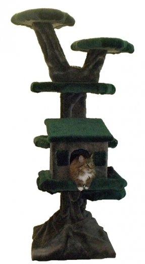 Large Cat Tree Furniture Cat Condos Foter