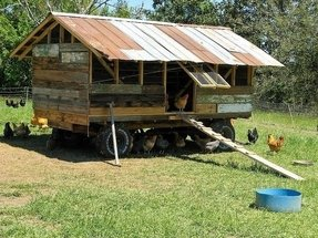 Large portable chicken coop