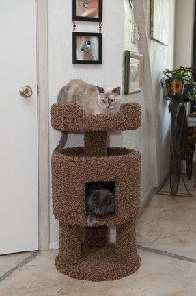 Whisker City Cat Furniture Foter