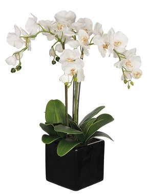 New Fake Orchid Arrangements - Foter LQ61
