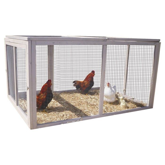 Extreme Hen Chicken Run