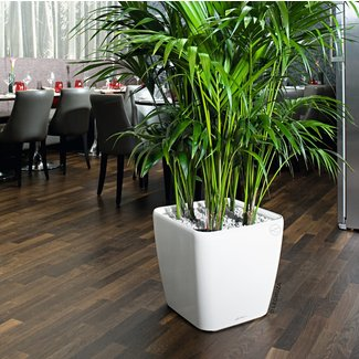 Large Indoor Planters Foter