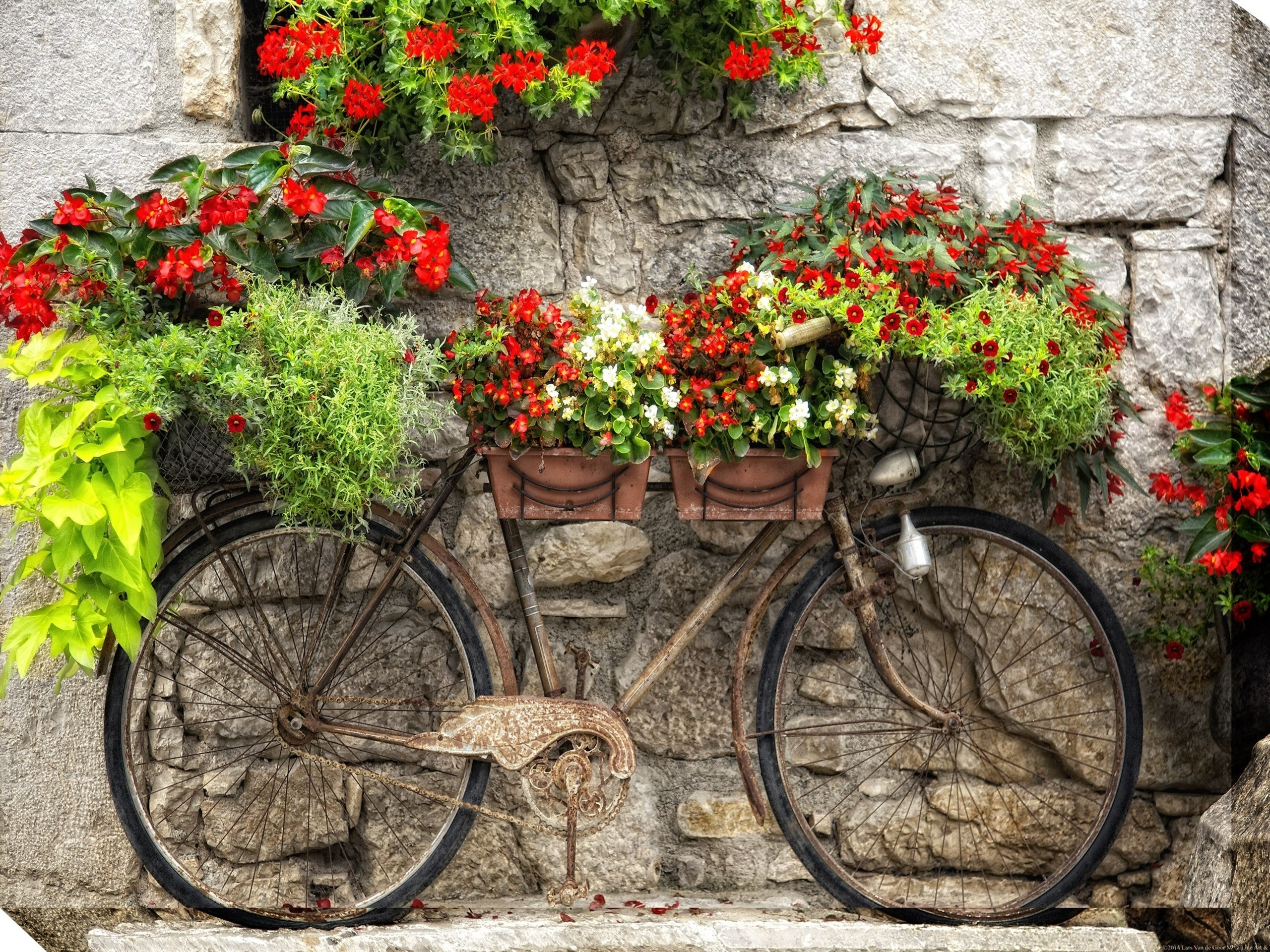 Rusty Bicyclette Outdoor Wall Decor