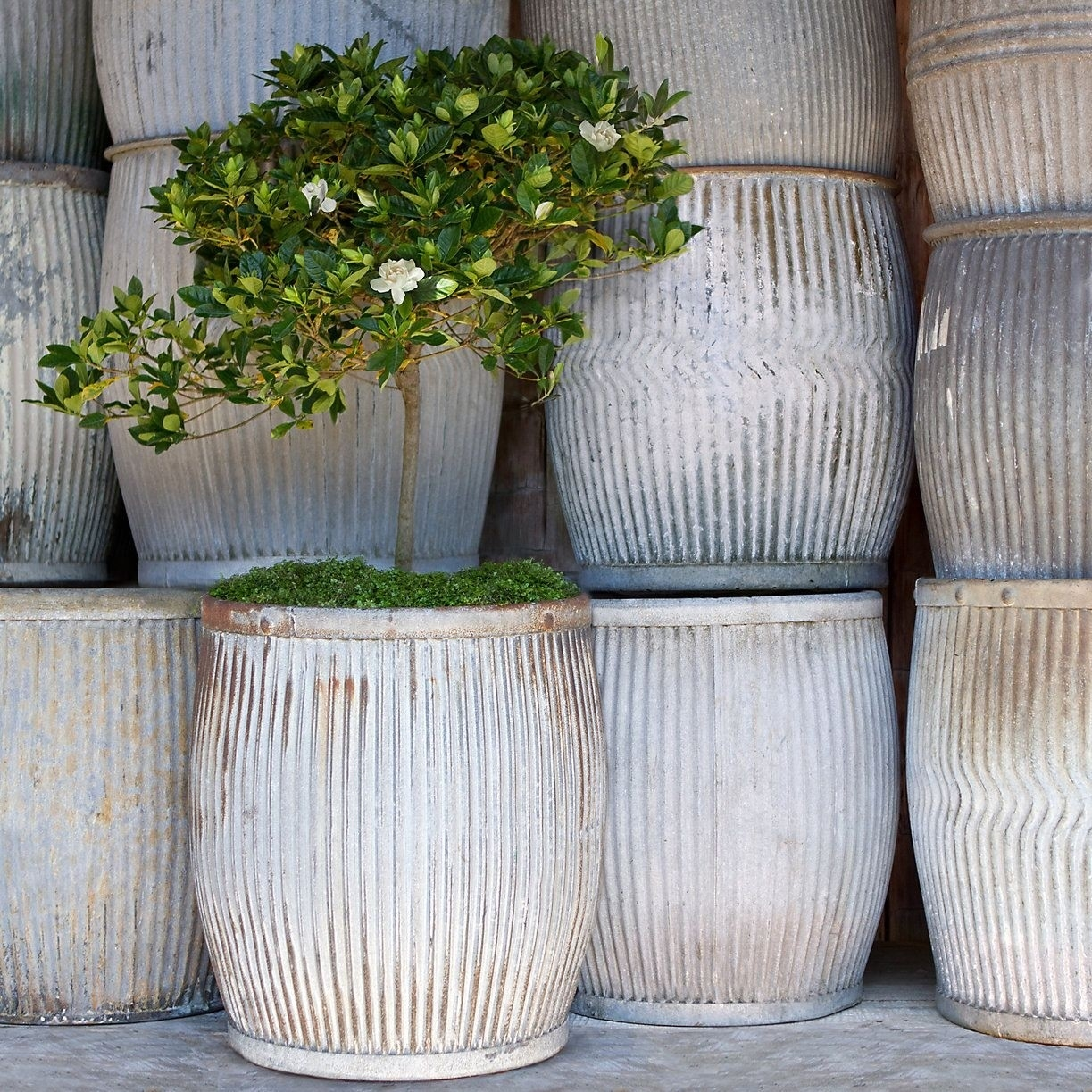 Large Metal Planters For 2020 Ideas On Foter